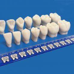 Macro Dentes